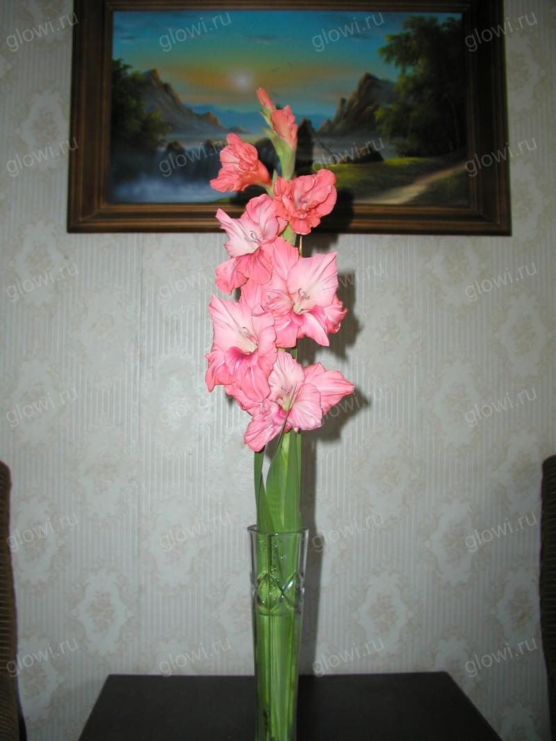 Может ли цветок светиться